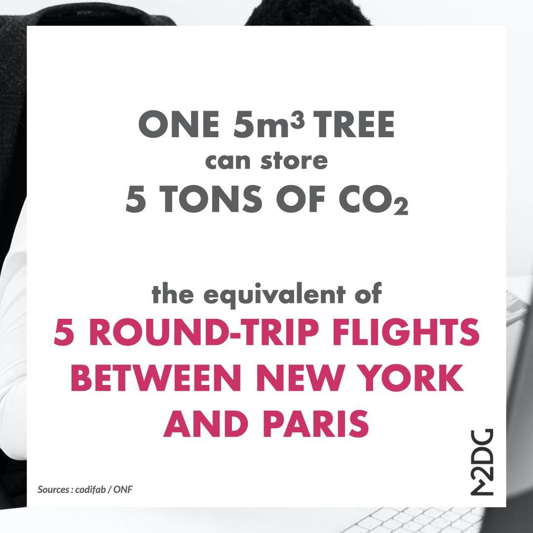 impact-trees-storing